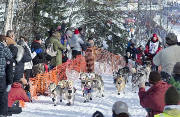 Photo of Aliy Zirkle and team start the 2013 Iditarod.